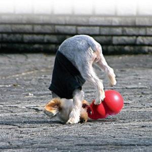 Aktivering/ Hundelegetøj