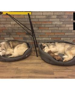 Hundekurve