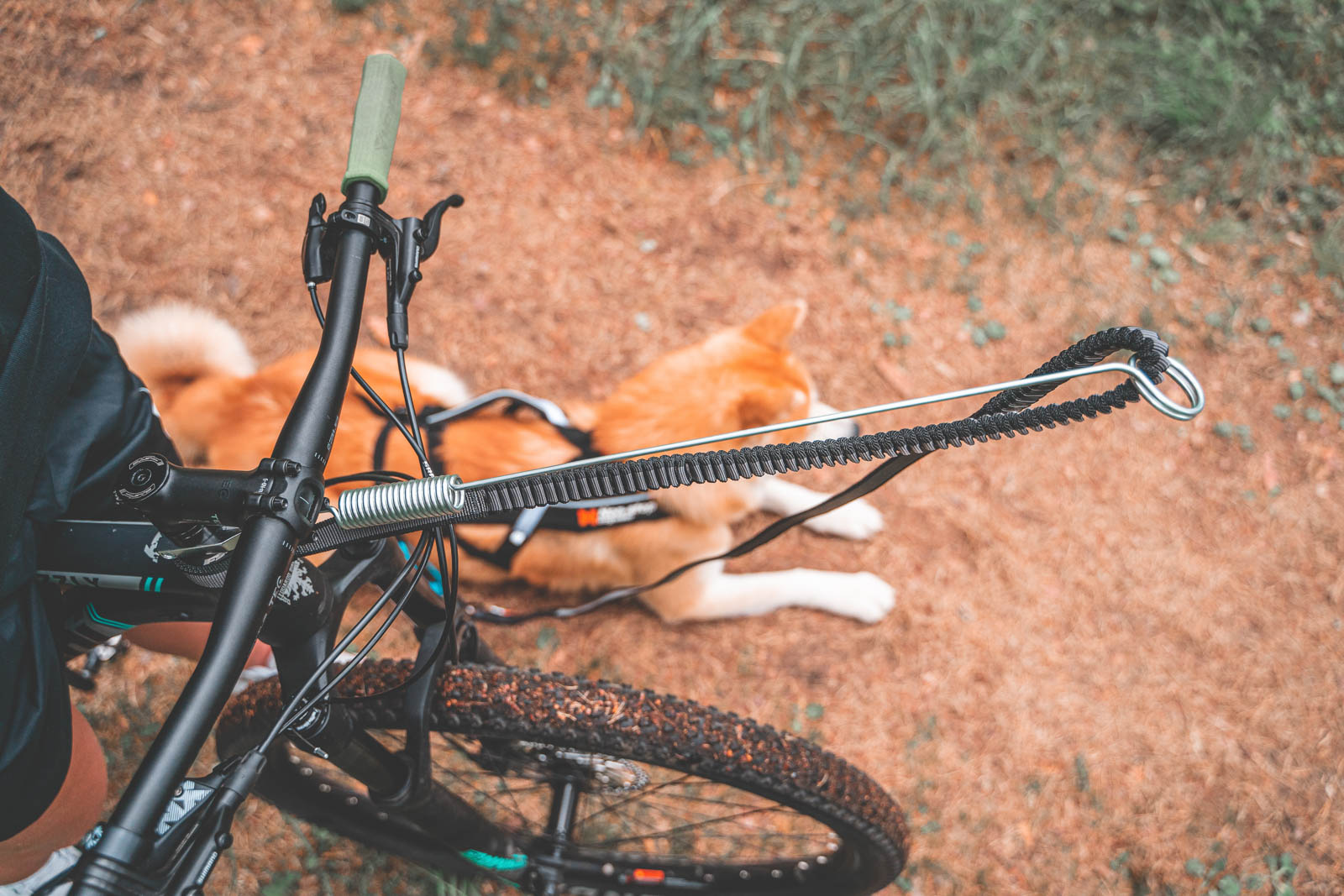 7 - Large 9.2 ft//2.8 Meter Touring Bungee Line and Combined Harness 1 Dog Non-stop dogwear Bike /& Scooterjor Starter Kit Plus : Bike Antenna
