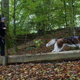 non-stop dogwear freemotion til canicross løb med hund
